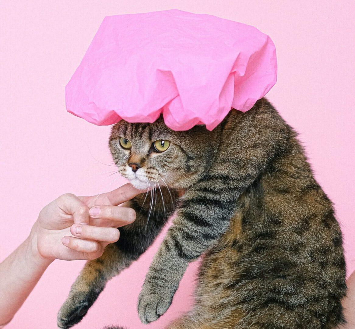 Katzen richtig baden – so gelingt's