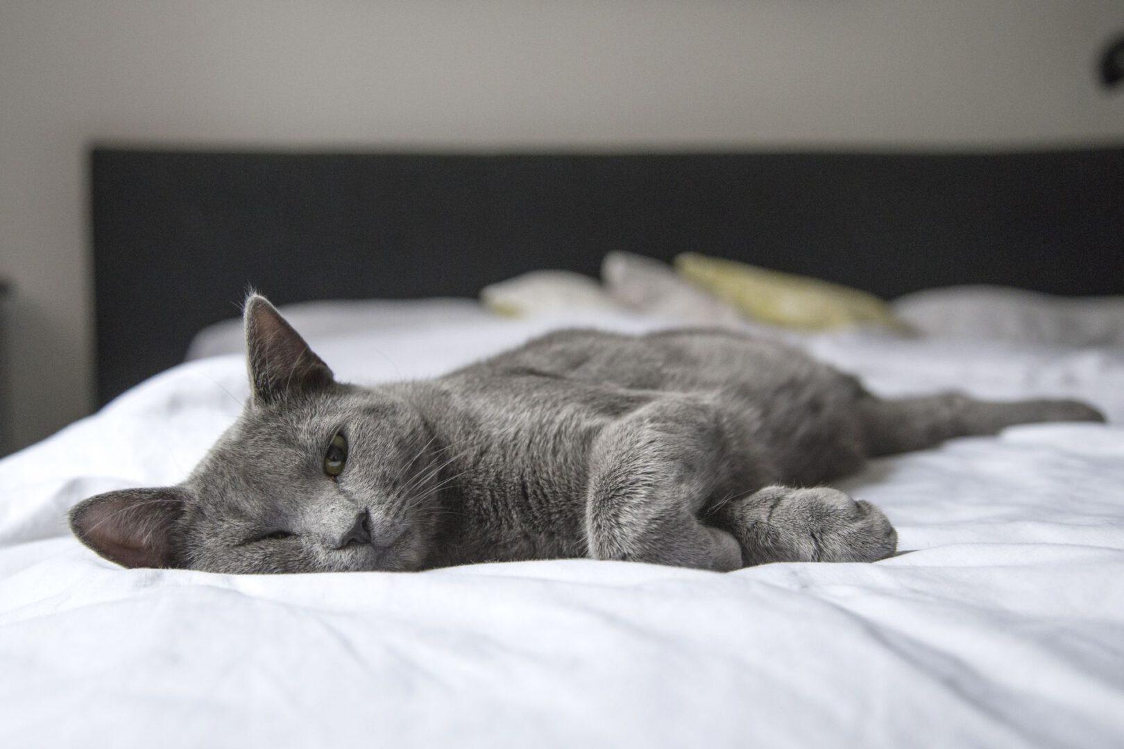 Wie lange darf ich meine Katze allein Zuhause lassen?