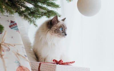 Kleine & große Geschenkideen für Katzenliebhaber – besonders und mit Sicherheit Freude pur