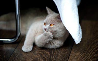 Krallenschneiden bei Katzen – so wird's gemacht