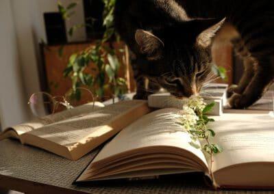 Die besten Bücher rund um die Katzenernährung
