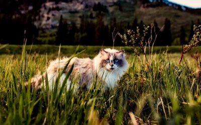So klappt nachhaltige Katzenhaltung