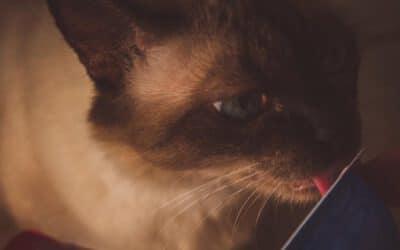 Top 10: Diese Leckerlis darfst du deiner Katze nicht vorenthalten