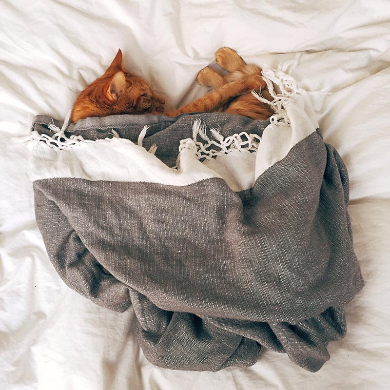 Katze Senior krank