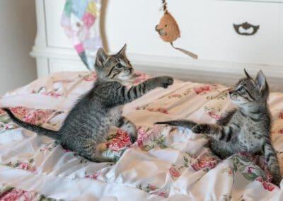 Die 5 besten Spielzeuge für Katzen – individuell und günstig
