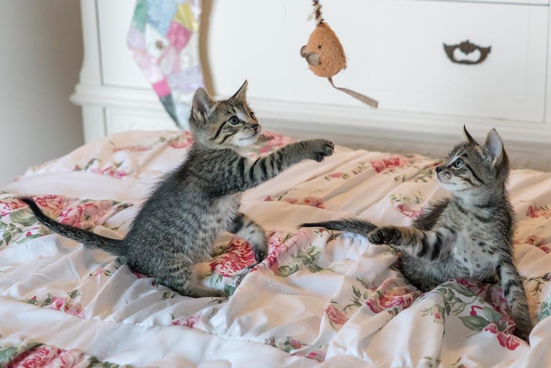 Die 5 besten Spielzeuge für Katzen - individuell und günstig