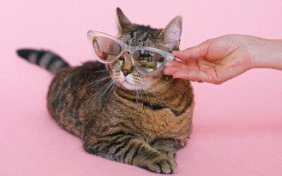 22 Lektionen, die ich mir von meinen Katzen abgeguckt habe