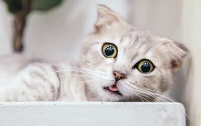 Wie die Umstellung von Katzenfutter & Co. gelingt