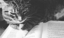 Katze von vorn bis hinten: Diese 3 Bücher helfen beim Leben mit deiner Katze