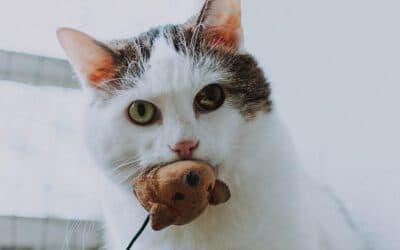 5 weitere heißbegehrte Spielzeuge für Katzen