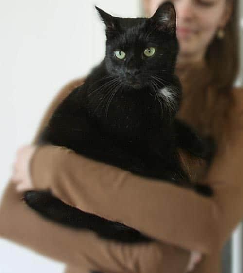 schwarze Katze tragen