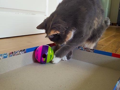 graue Katze Spielball