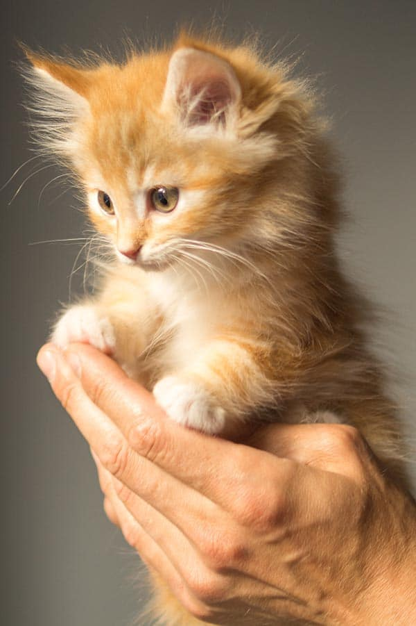 kleine Katze hochheben