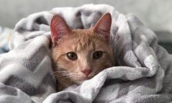 Erste Hilfe für Katzen - Teil III/III