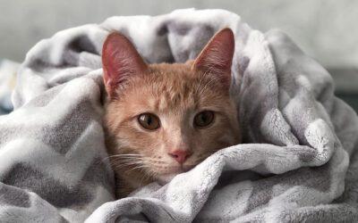 Erste Hilfe für Katzen – Teil III/III