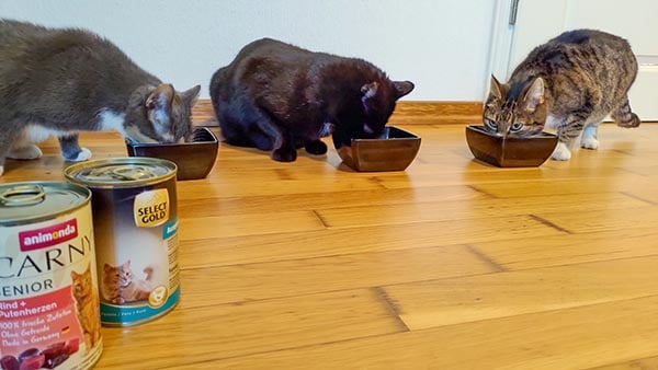Drei Katzen fressen Seniorfutter