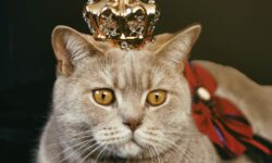 Wie viel kostet eine Katze?