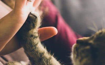 33 Lebensweisheiten, mit denen meine Katzen mein Leben erleichtern