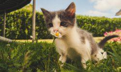 So gewöhnst du deine Katze an den Freigang