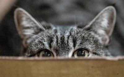 Tierheim, Züchter, Privatperson – Woher bekomme ich eine Katze und was ist zu beachten?