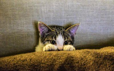 So machst du deine Wohnung in null Komma nichts katzensicher