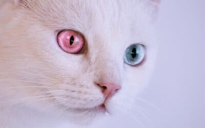 Die 5 beliebtesten Katzenrassen in Deutschland: Was macht sie so besonders?
