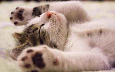 Was dir niemand sagt – du aber unbedingt wissen solltest, wenn dein Kitten einzieht