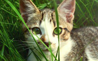 Achtung, giftig! Diese Pflanzen sind Gift für deine Katze