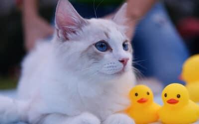 Die 5 Abkühlungen, die deiner Katze die Sommerhitze erträglicher machen