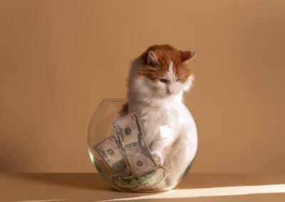 Bezahlst du zu viel für dein Katzenspielzeug?
