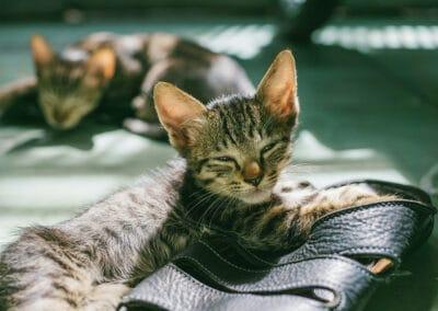 Eingewöhnungstipps für einen guten Start: Das erwartet dich in den ersten Wochen mit Kitten
